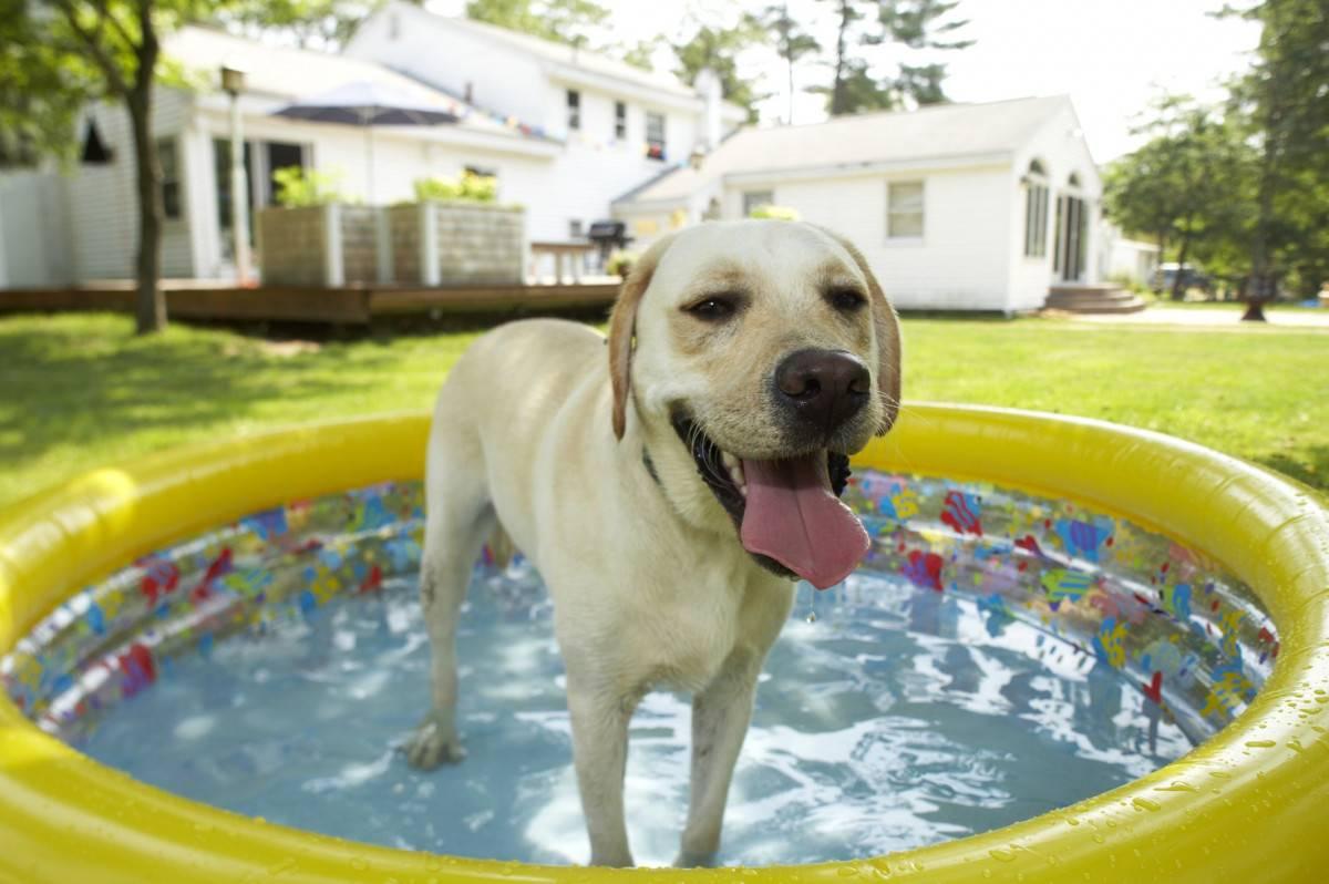 9 способов как помочь собаке в жару: как ведут себя собаки, как охладить собаку в сильную жару