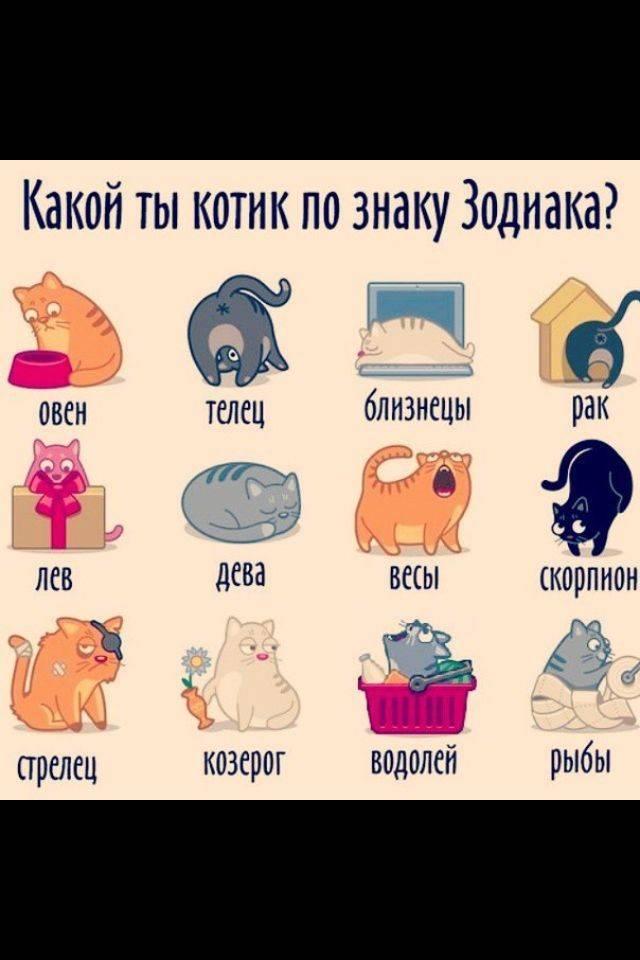 Ассоциацию с каким животным вызывает каждый знак зодиака