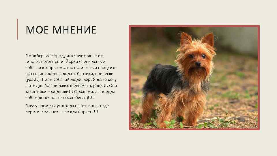 » 15 лучших пород собак: для детей, для аллергиков, для маленькой квартиры 15 лучших пород собак: для детей, для аллергиков, для маленькой квартиры — мои собаки