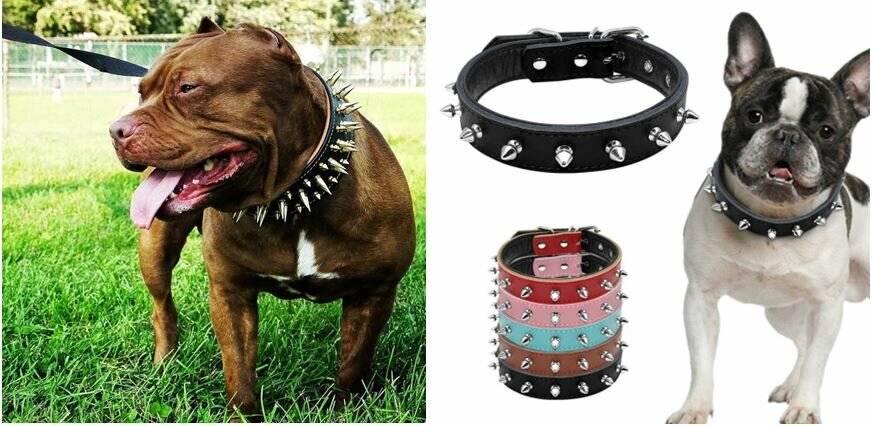 Gps-ошейник для собак: описание, модели, отзывы