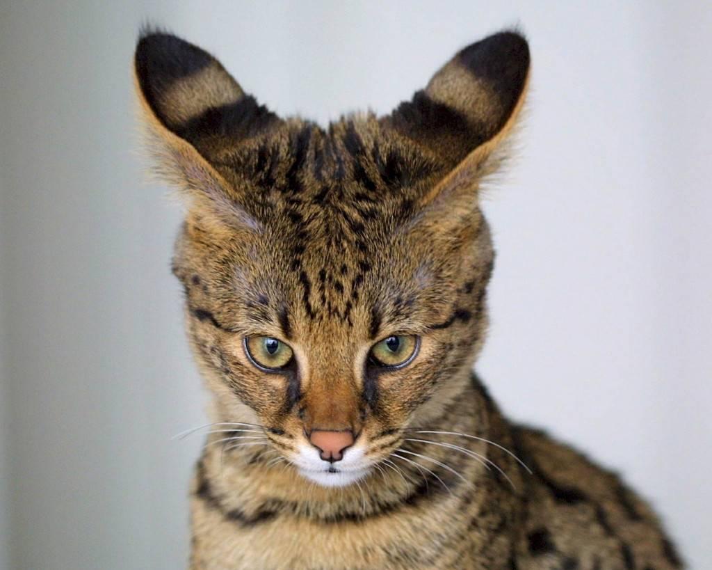 Топ 10 вымерших животных по вине человека