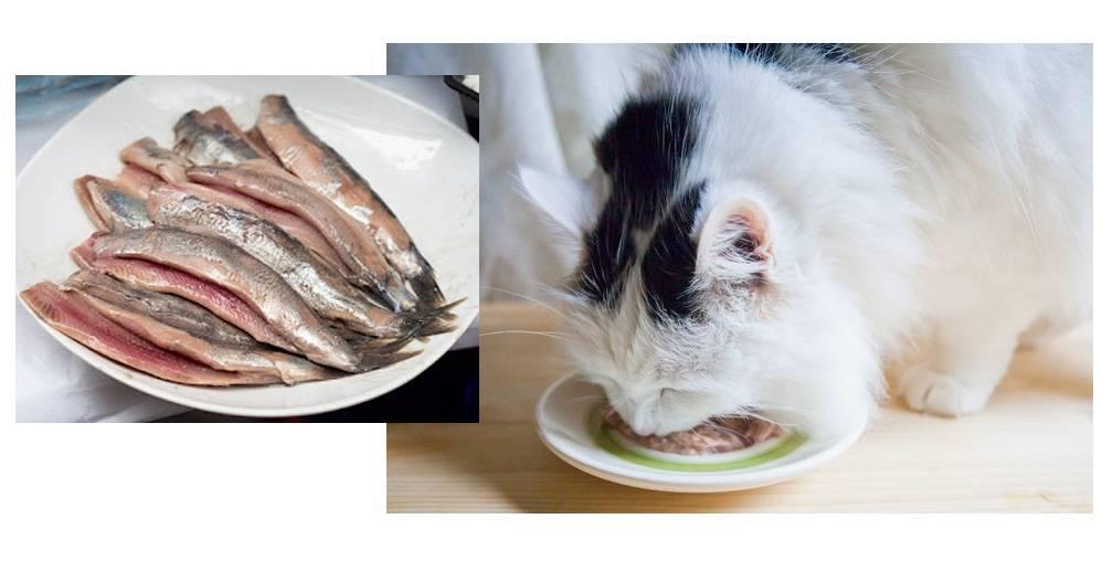 Можно ли кормить кошку рыбой: почему рыбу нельзя давать своей кошке