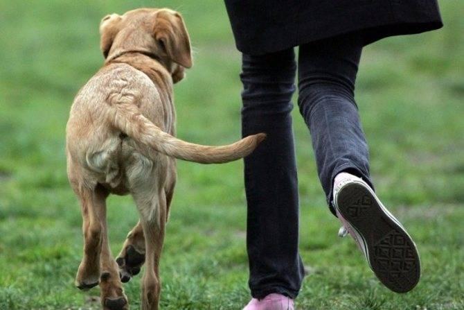 3 причины, почему собака бегает за своим хвостом и кусает его: что это значит и что делать