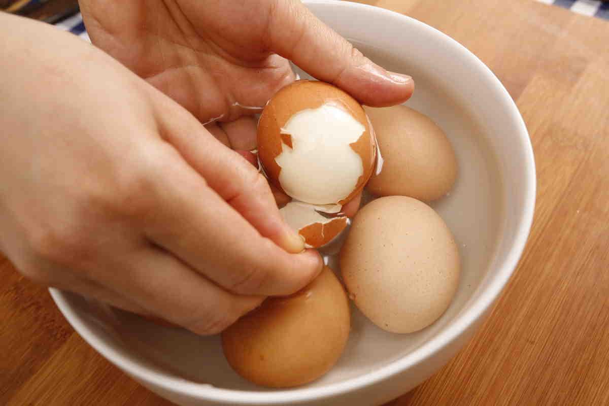 Кормление собак: можно ли собаку кормить яйцами. можно ли давать собакам яйца? сырое яйцо для собаки полезно