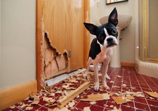Собака пьет много воды и часто мочится: причины и лечение,