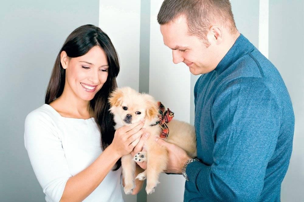 Топ-10 пород собак для небольшого дома или квартиры