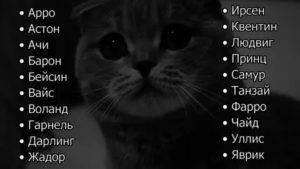 Как назвать любимого кота