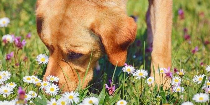 Собака чихает: что значит если фыркает и сопливит, что делать и чем лечить, причины, с кровью и хрюкает, много раз подряд без остановки, лечение