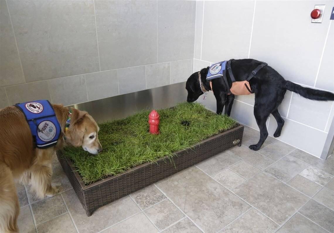 Как приучить собаку к лотку (туалету)? основные приемы обучения