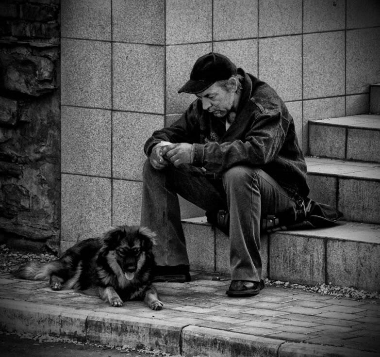 Какие поступки хозяина заставят собаку обидеться