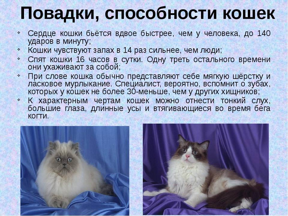 Характер кошки и кота: в чем различия?