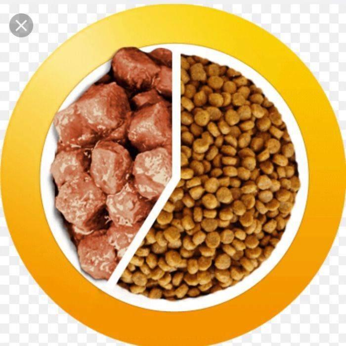 Разрешается ли кормление собак сухими и натуральными кормами одновременно