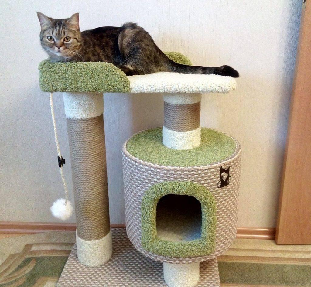 Когтеточка — неотъемлемый атрибут для кошки