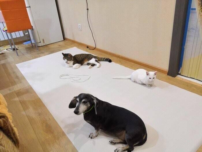 Как сохранить ремонт в квартире, если у домашних животных свое понятие о комфорте | kleinburd news как сохранить ремонт в квартире, если у домашних животных свое понятие о комфорте — kleinburd news