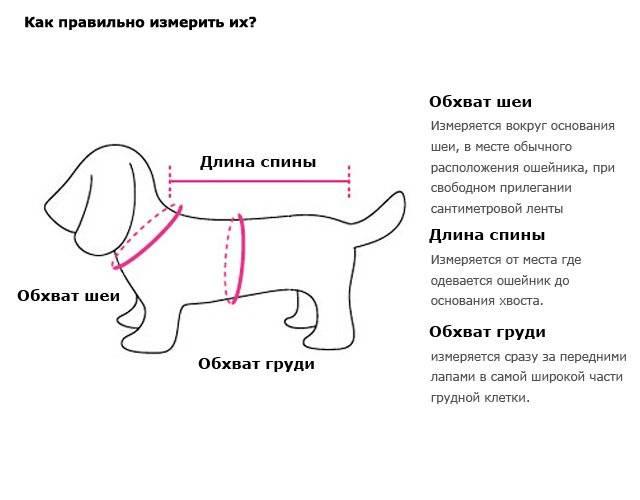 Как определить размер одежды для собаки: как мерки нужны, разнообразие размеров