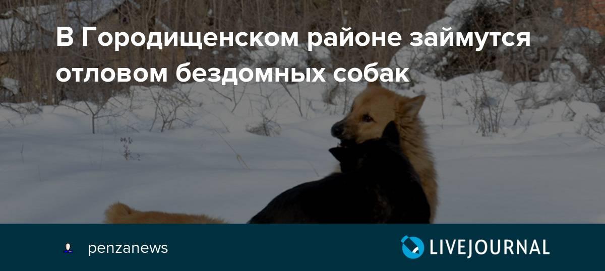 Псы с городских окраин: почему на россиян продолжают нападать безнадзорные собаки | статьи | известия