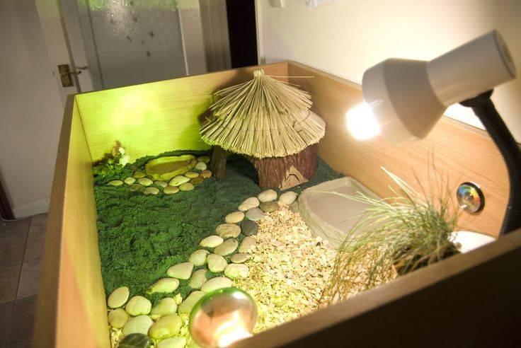 Содержание сухопутных черепах в домашних условиях