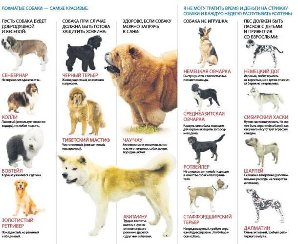Самые опасные собаки в мире топ-10