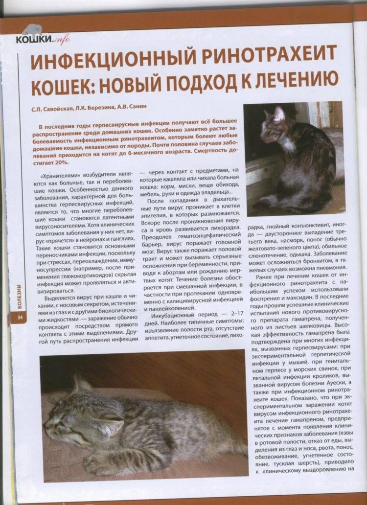 Вирус иммунодефицита у кошек симптомы и лечение - муркин дом