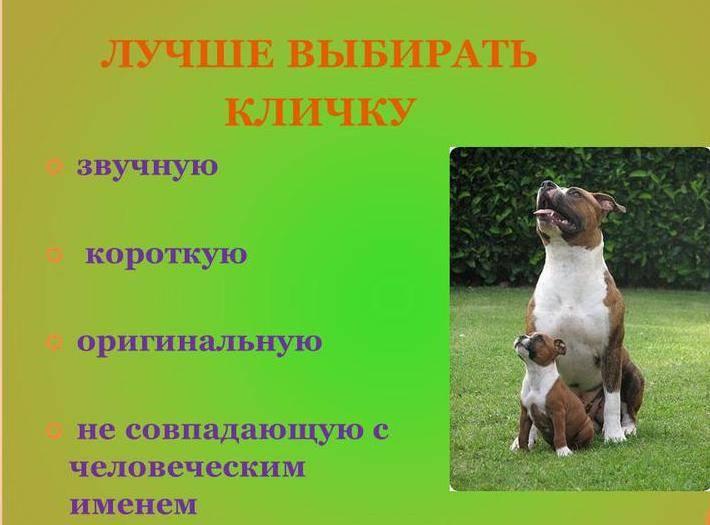 Что означают клички арчи, грей, берта, айза для собак и многие другие