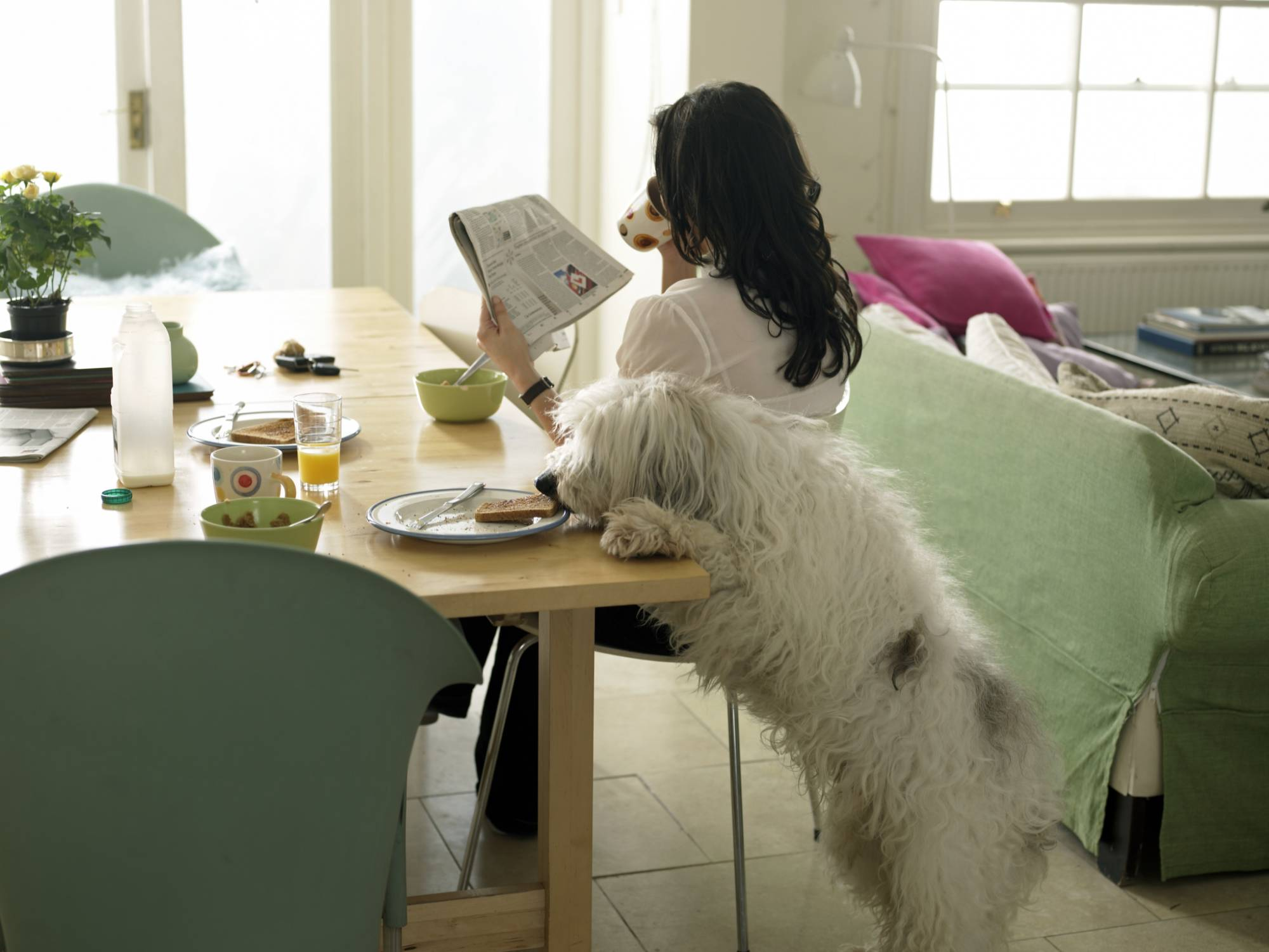 5 вредных привычек гарантируют сокращение жизни вашего питомца