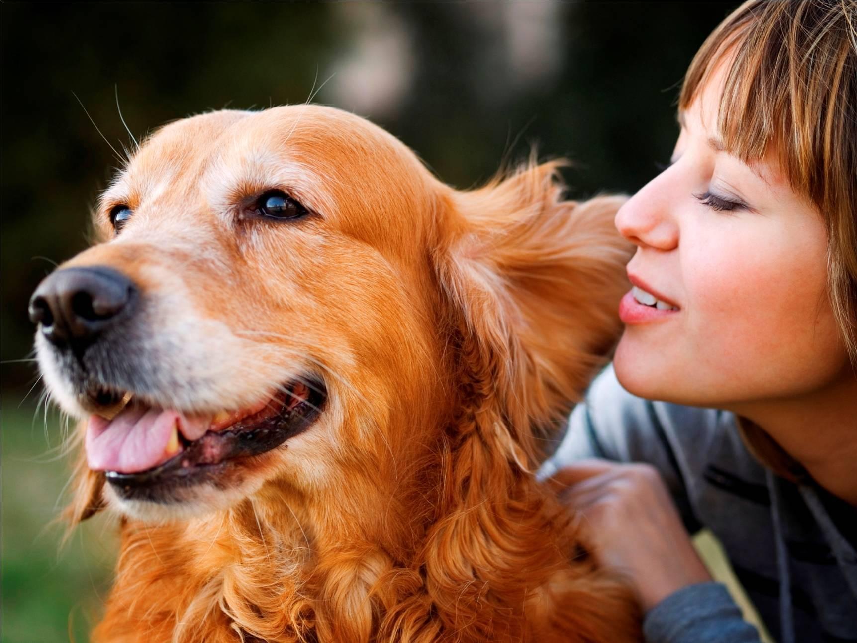 4 улыбки собаки