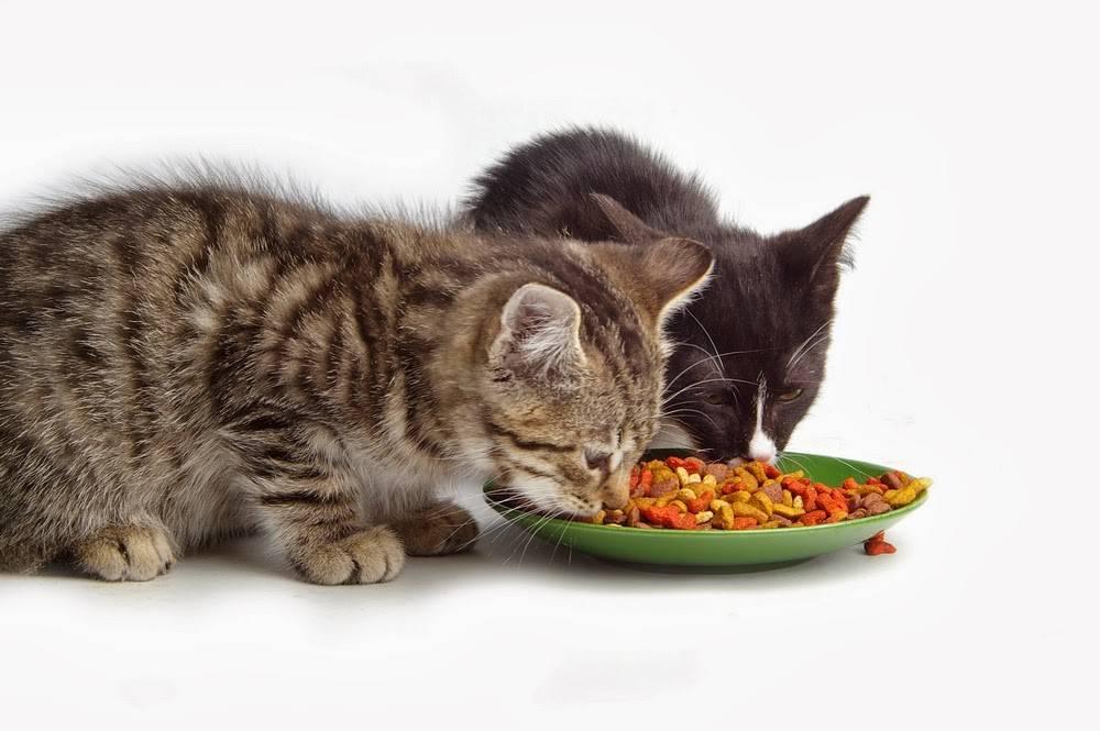 Чем кормить кошку, если она ничего не ест: выясняем причины и подбираем рацион
