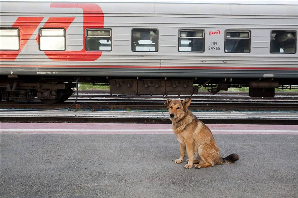 Перевозка собак