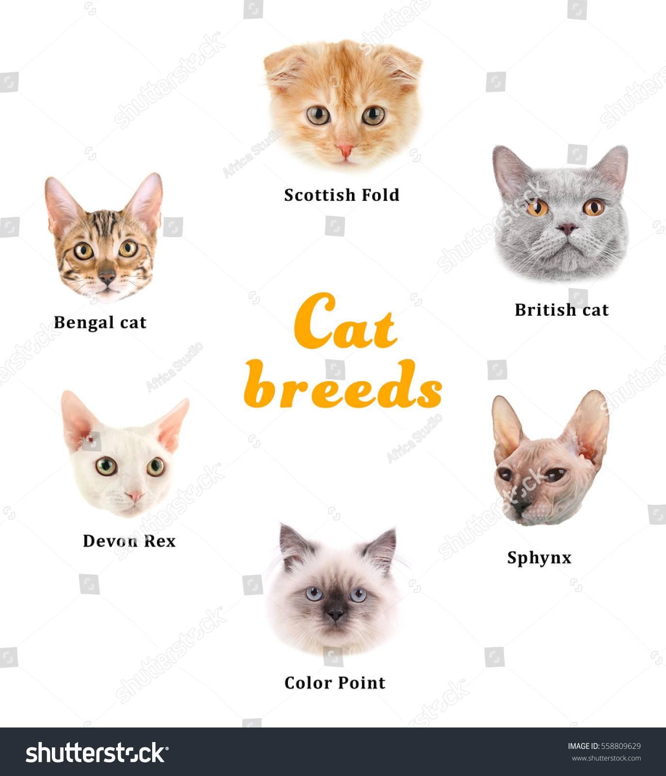 Более 300 имен для сфинксов котов и кошек, красивые клички для котенка мальчика и девочки