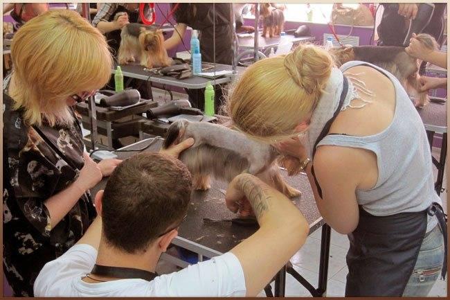 Курсы груминга - стрижка собак и кошек. обучение грумингу в москве - школа груминга боншери
