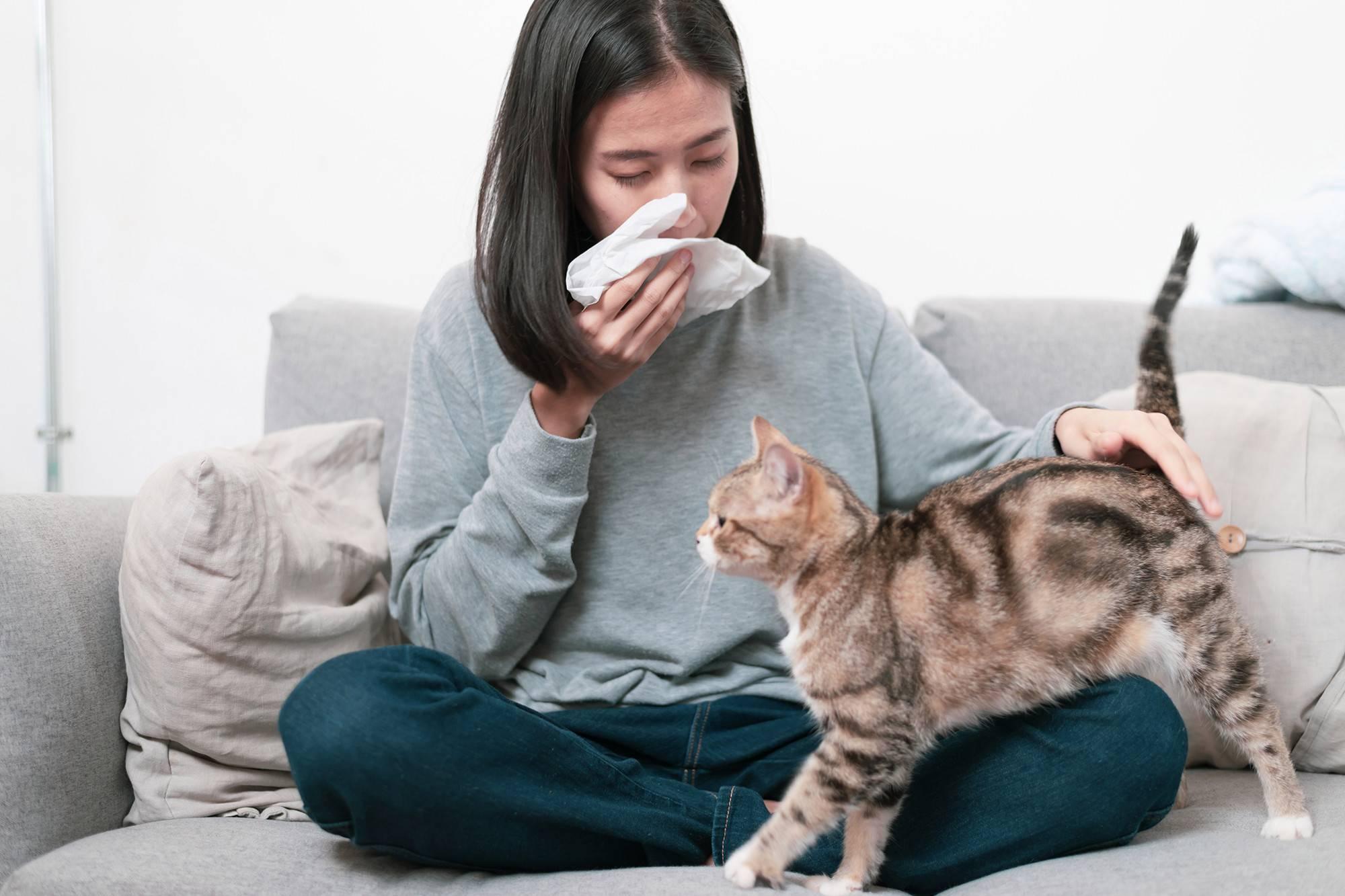 Аллергия на кошек. есть ли выход?