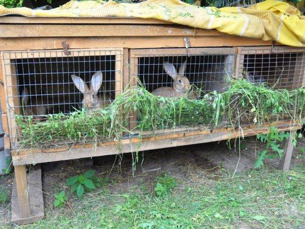Разведение кроликов в клетке