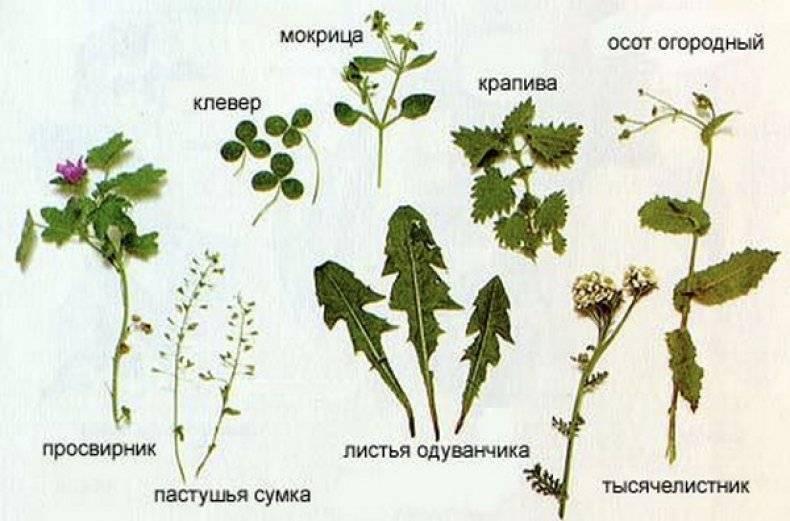 Какую траву нельзя давать кроликам, можно ли давать сено?