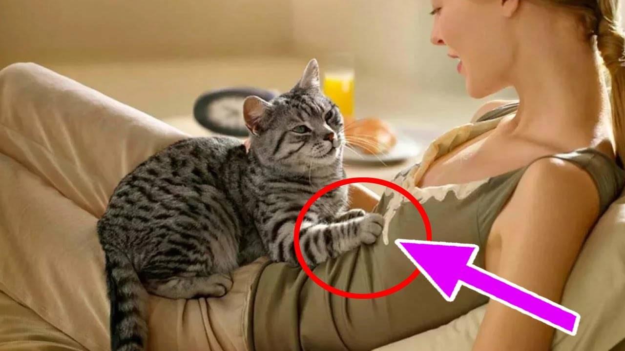 Почему кошки топчут нас лапками, и как себя вести человеку