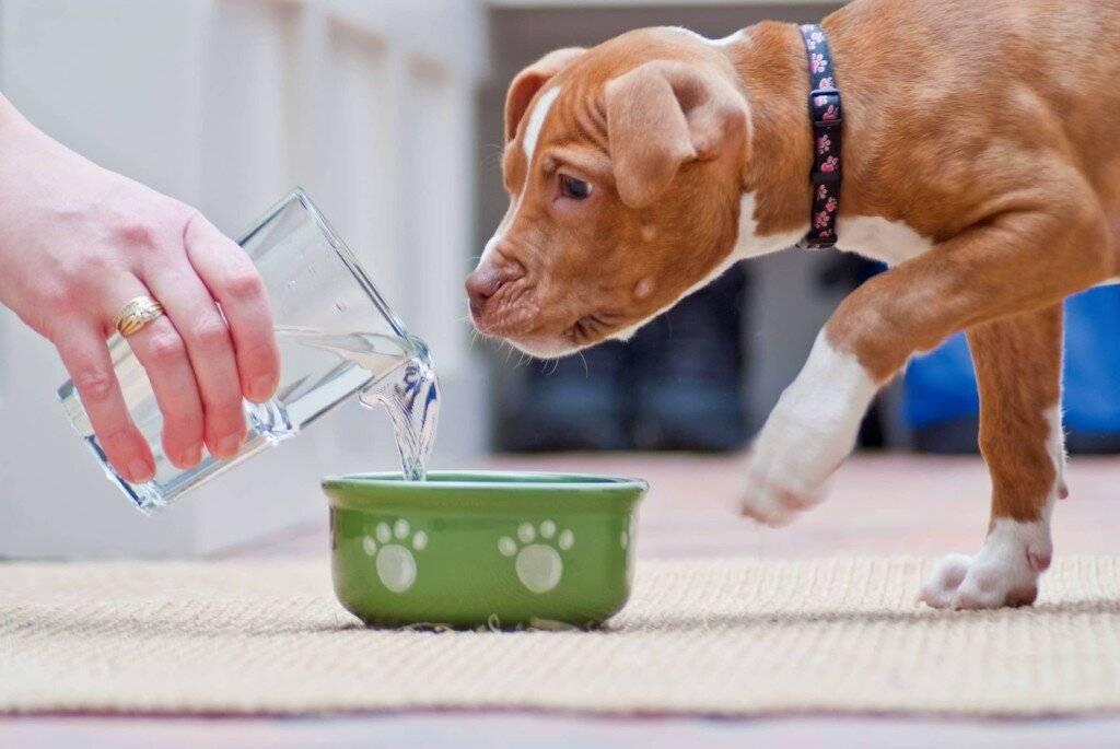 Что делать и почему собака не ест, не пьет воду и только лежит: причины и лечение щенка и пса, когда плохо питается, вялый или трясется несколько дней