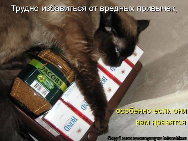 Ядовитые растения для кошек: комнатные, уличные, симптомы отравления