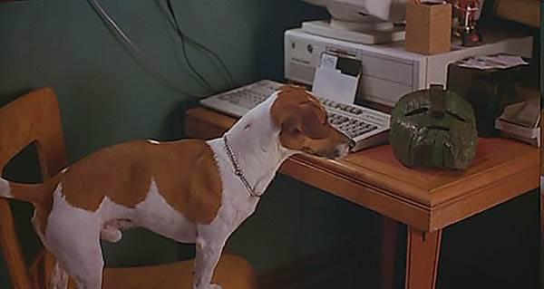 Породы собак из известных фильмов и мультиков