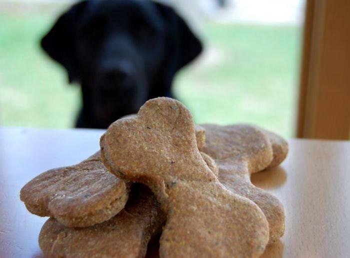 Какие лакомства давать собаке? советуют специалисты!