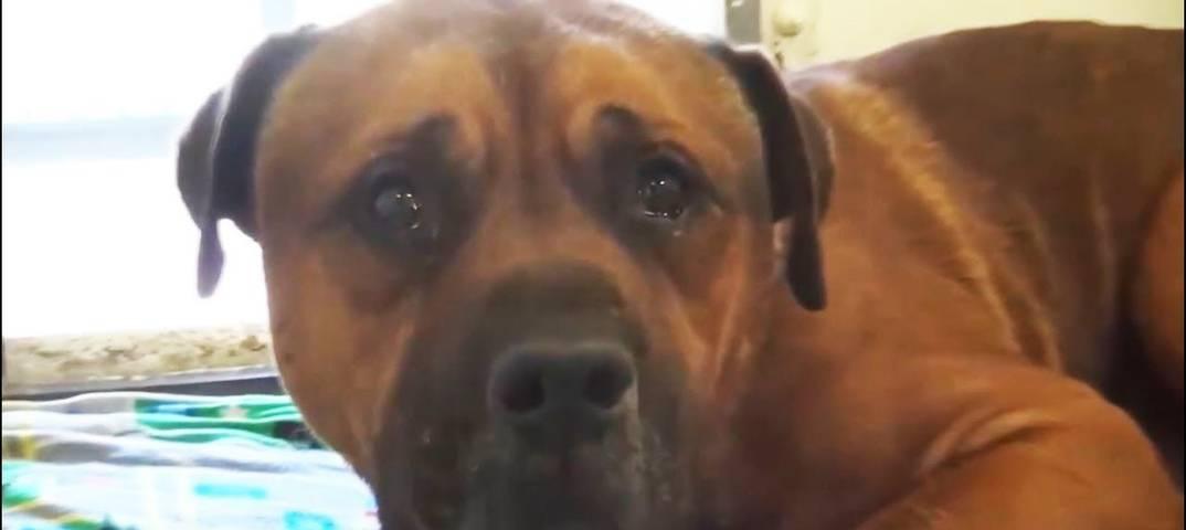 Почему собаки плачут во время сна