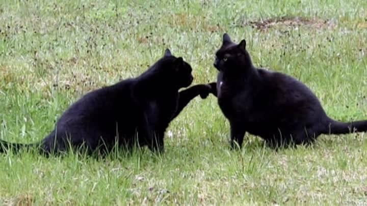 Черная кошка, скрещивание пальцев, число 13: откуда появились самые популярные суеверия