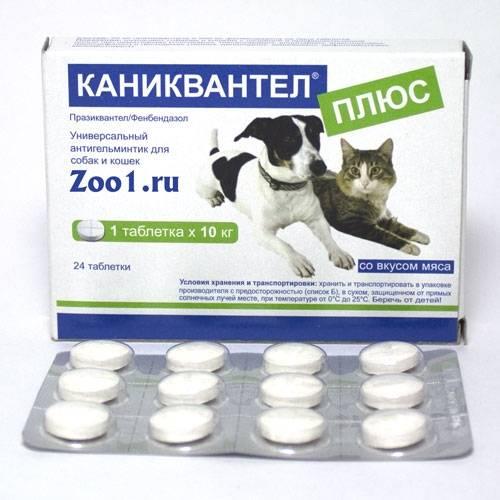Каниквантел для кошек – инструкция, дозировка, преимущества