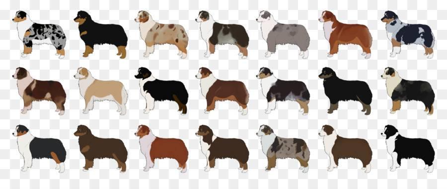 Окрас немецкой овчарки: фото и описание, стандартные и нестандартные цвета шерсти