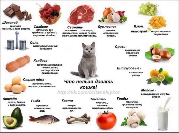Какие овощи и фрукты можно давать собакам, а какие нельзя.