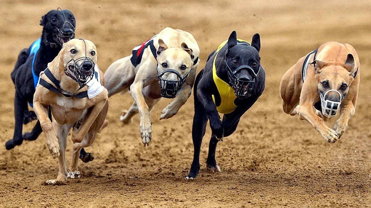 Топ-90 умных пород собак