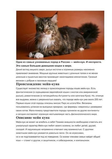 Злой мейн-кун: почему кот кусается, царапается и проявляет агрессию, причины и способы воспитания