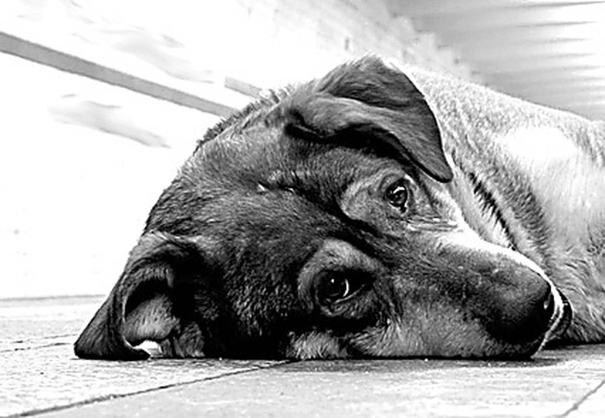 """Задалась вопросом, зачем собака """"копает"""" лежанку, перед тем как улечься. оказалось, что срабатывает территориальный инстинкт"""