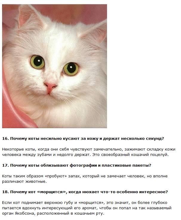 Все о кошках, интересные факты о кошках и котах