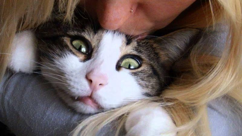 Как понимать кошек. личный опыт