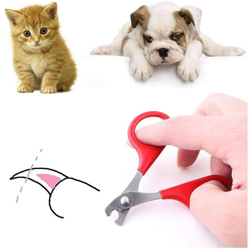 Как подстричь когти кошке или коту дома: необходимые приборы и техника процедуры, чтобы правильно подстригать