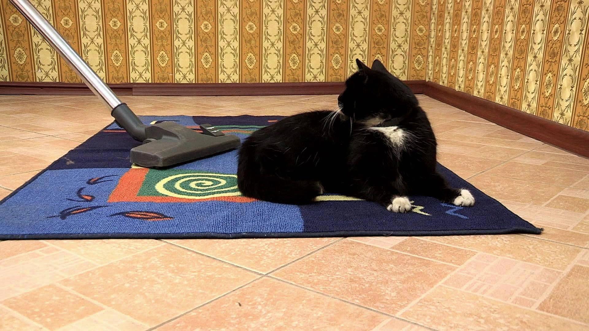 Как избавиться от шерсти домашних животных в доме | полезно (огород.ru)